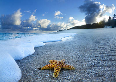 On The Beach Photograph - Blue Foam Starfish by Sean Davey