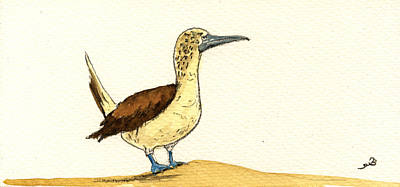 Boobies Painting - Blue Footed Booby by Juan  Bosco
