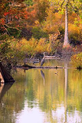 Photograph - Blue Heron Lake by Pete Federico