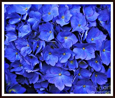 Photograph - Blue Hydrangea by Chalet Roome-Rigdon