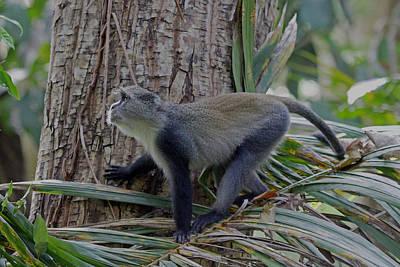 Photograph - Blue Monkey by Tony Murtagh