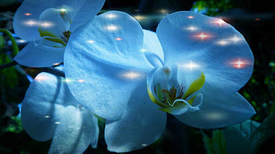 Photograph -  The Grace And Nobility Of Orchids by Xueyin Chen