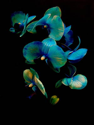 Photograph - Blue Orchid by Rhonda Jones