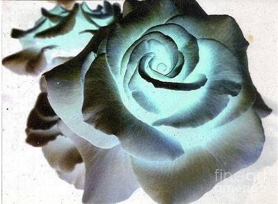 Photograph - Blue Rose by Rod Ismay