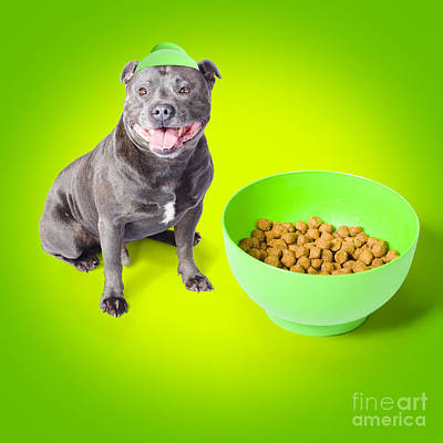 Blue Staffie With His Bowl Of Food Art Print by Jorgo Photography - Wall Art Gallery