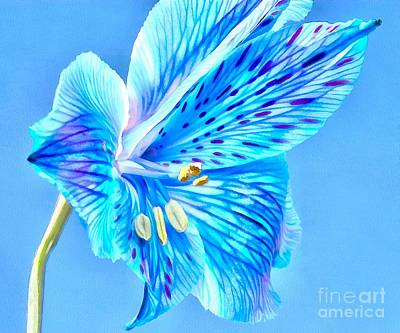 Blue Flowers Photograph - Blue Summer by Krissy Katsimbras