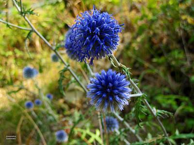 Photograph - Blue Wild Flower by Alexandros Daskalakis