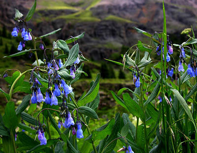Photograph - Blue Wildflowers by Robert Lozen