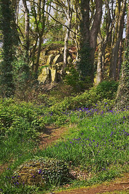 Photograph - Bluebell Wood - Newtownards - County Down by Jane McIlroy