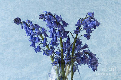 A White Christmas Cityscape - Bluebells 1 by Steve Purnell