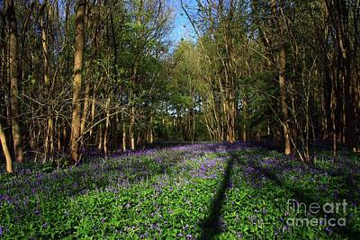 Photograph - Bluebells by Jeremy Hayden
