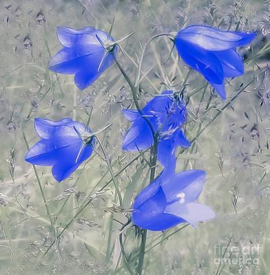 Photograph - Bluebells by Sylvia  Niklasson