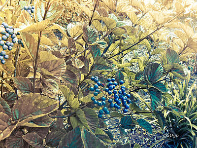 Photograph - Blueberries by Connie Dye