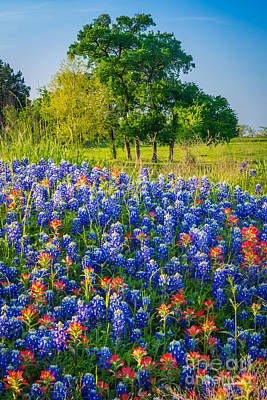 Pasture Scenes Photograph - Bluebonnet Pasture by Inge Johnsson