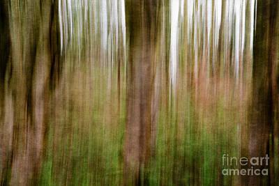Photograph - Blurred Trees by Matt Malloy