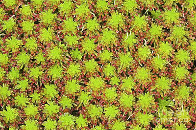 Glen Affric Photograph - Bog Moss, Overhead View by Duncan Shaw
