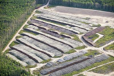 Destruction Photograph - Boreal Forest Felled For A Tar Sands Mine by Ashley Cooper