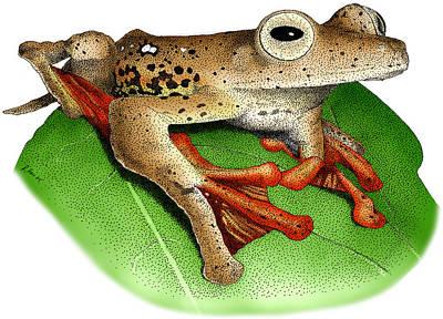 Borneo Red Flying Frog Art Print