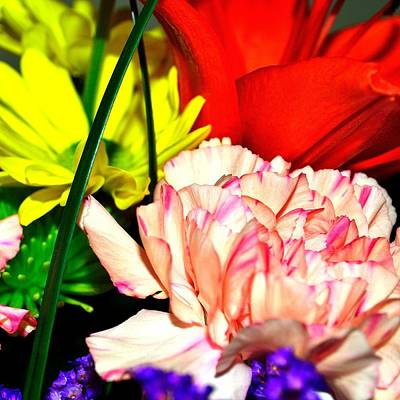 Photograph - Bouquet-of-flowers 2 by Richard Zentner