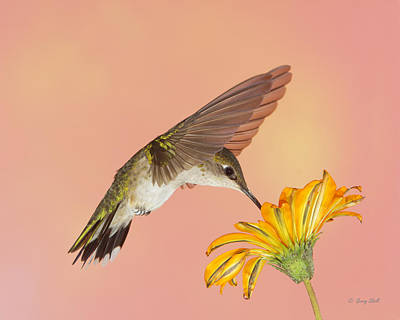 Photograph - Bowing To The Nectar Gods by Gerry Sibell