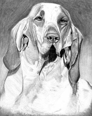 Bracco Italiano Dog Portrait Art Print by Olde Time  Mercantile