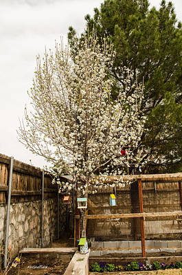 Photograph - Bradford Pear Tree by Allen Sheffield