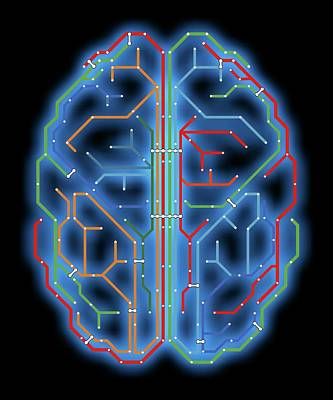 Imitation Photograph - Brain by Alfred Pasieka