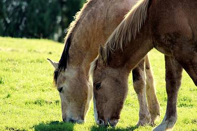 Horse Photograph - Breakfast Together by Rima Biswas