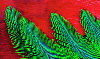 Quetzal Photograph - Breast And Wing Feather Design by Darrell Gulin