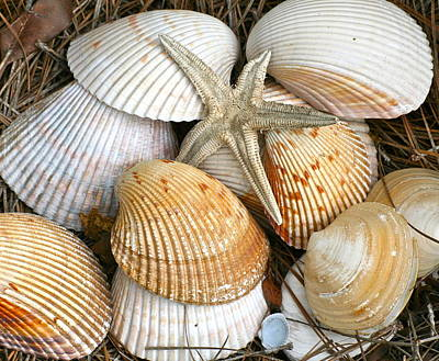 Photograph - Bringing Sea Shells Home by Eve Spring