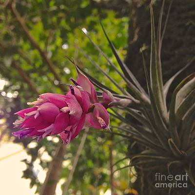 Flower Photograph - Bromelia by Fernanda Travensolli