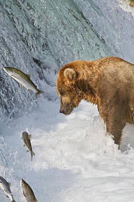 Brown Bear  Ursus Arctos  Standing Art Print by Gary Schultz