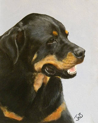 Dog Painting - Bruno The Rottweiller by Janice M Booth