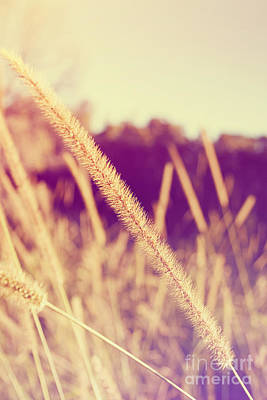 Photograph - Brush Grass by Jorgo Photography - Wall Art Gallery