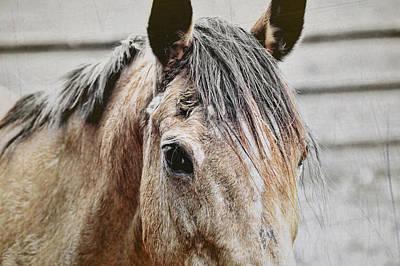 Photograph - Retired Buckskin Art by JAMART Photography
