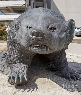 Photograph - Badger Statue At Uw Madison by Steven Ralser