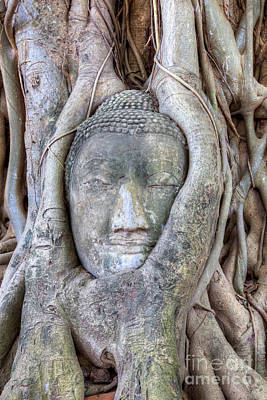 Buddha Head In Tree Art Print by Fototrav Print