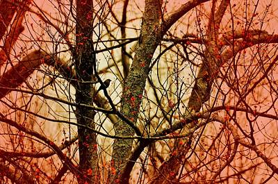 Photograph - Budding Spring Afire by JAMART Photography