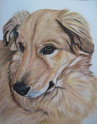 Drawing - Buddy by Joan Pye
