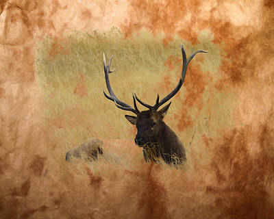 Photograph - Bull Elk Paint by Steve McKinzie