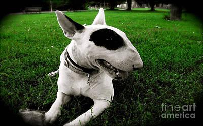 Bull Terrier Mixed Media - Bull Terrier  by Marvin Blaine