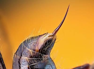 Stinger Photograph - Bullet Ant Stinger by Nicolas Reusens