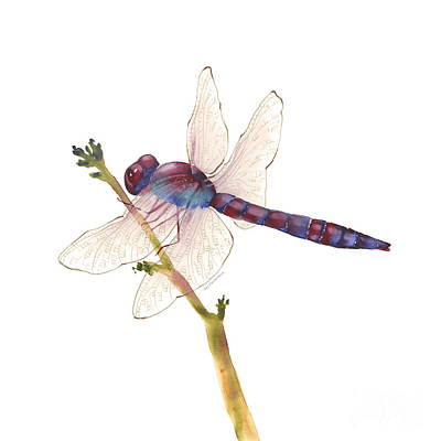 Animals Paintings - Burgundy Dragonfly  by Amy Kirkpatrick