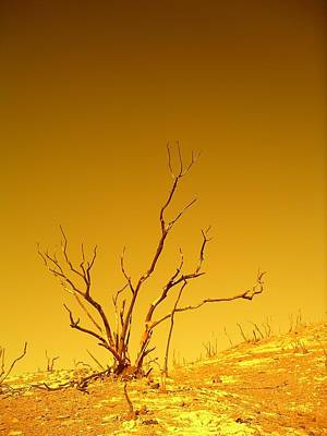 Photograph - Burnt Bush by Keith McGill