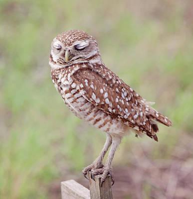 Burrow Owl Photograph - Burrowing Owl-1  by Kim Hojnacki