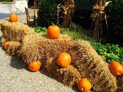 Pumpkin Photograph - Busch Gardens - 12129 by DC Photographer