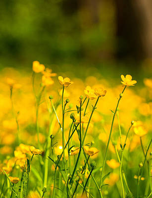 Wall Art - Photograph - Buttercup Fields by Scott Hafer