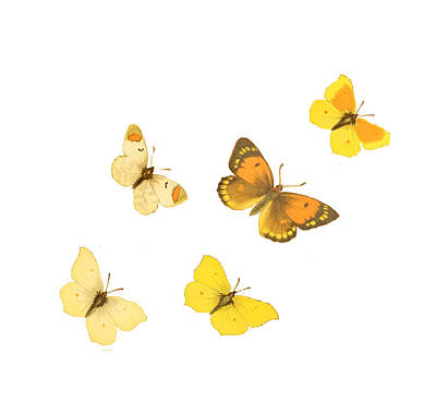 Butterflies Art Print by Philip Ralley