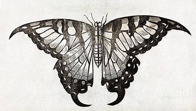 Artwork Of Butterfly Photograph - Butterfly, 17th Century Artwork by Middle Temple Library