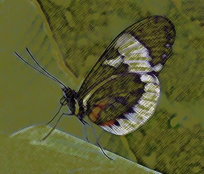 Butterfly Green Art Print